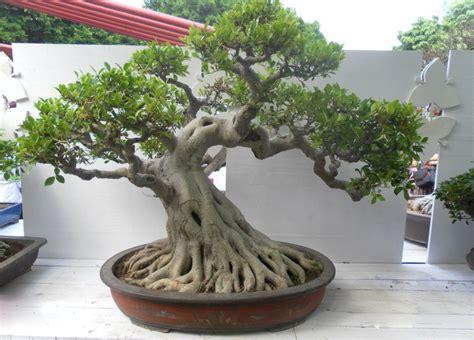 Nature Stek Malaysia do茵al sahte plastik yapay banyan a茵ac莖 ile bonsai bitki