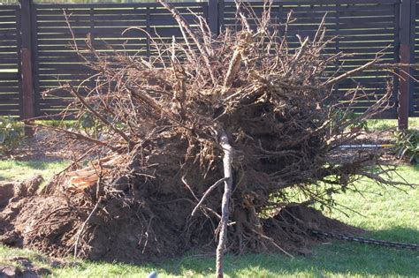 Schöne Bäume Im Garten by Baum Richtig F 228 Llen Baum Richtig F Llen Anleitung Und