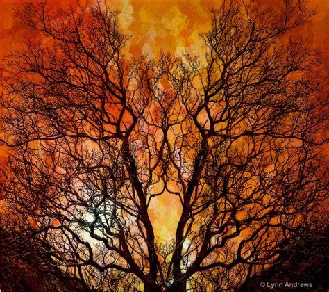 The Burning Bush the burning bush photograph at lynnandrewsphotography