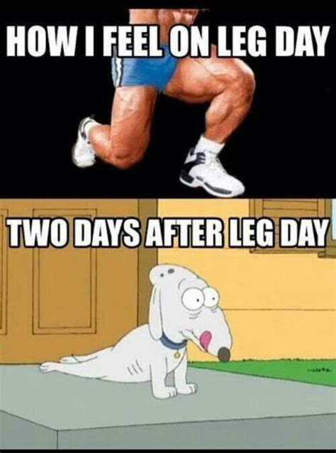 After Leg Day Meme - leg day fitness humor gym humor funny stuff healthy