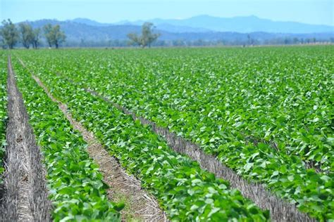 Can Soybeans Be Planted To Detox Land by Cashing In On Soybeans The Land