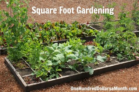 square footage calculator for the home garden pinterest square foot gardening archives one hundred dollars a month