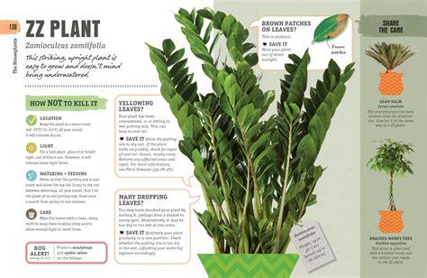 kill  houseplant survival tips