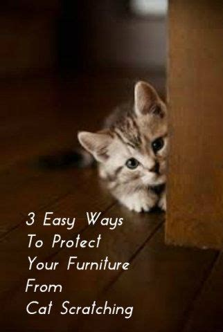 How To Get Cats To Stop Scratching Furniture by 3 Easy Ways To Protect Your Furniture From Cat Scratching