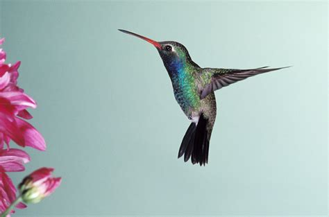 hummingbird infographics