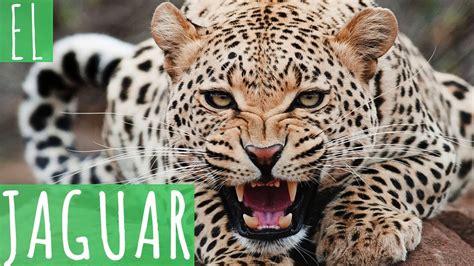 el jaguar jaguar s blog el jaguar youtube
