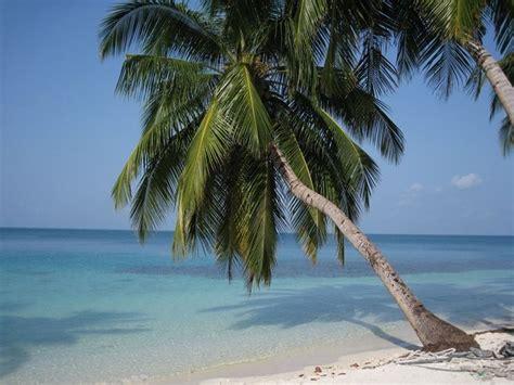 palma da giardino palma pianta piante da giardino caratteristiche della