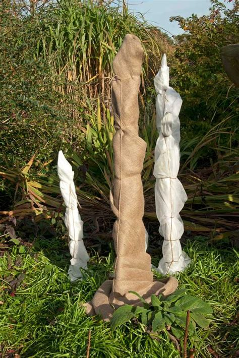 winter tree wrap how to protect your banana plants winter rhs gardening