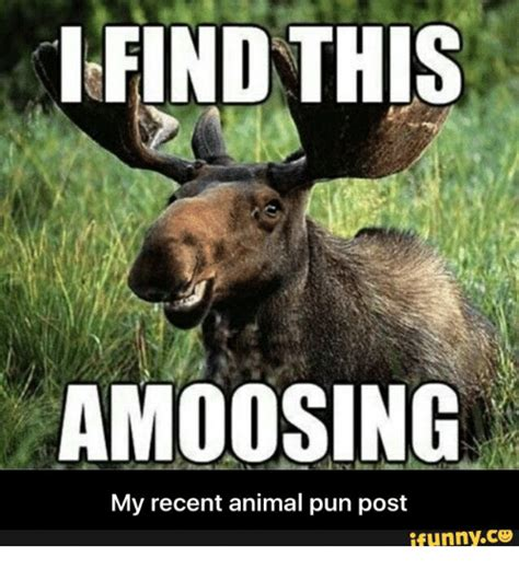 find  amoosing   animal pun post ifunnyco