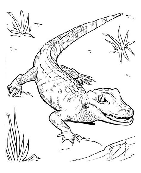 Printable Alligator Coloring Pages Coloring Me Aligator Coloring Pages
