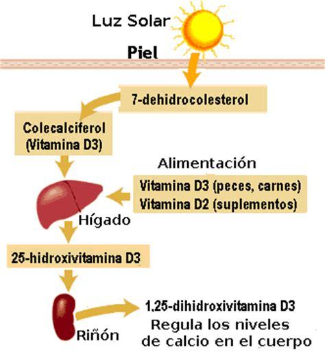 alimentos con vitamina d3 vitamina d metabolismo pediatraldia cl