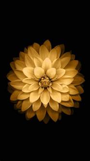 Golden Lotus Flower Golden Lotus Flower Ios Android Wallpaper Free