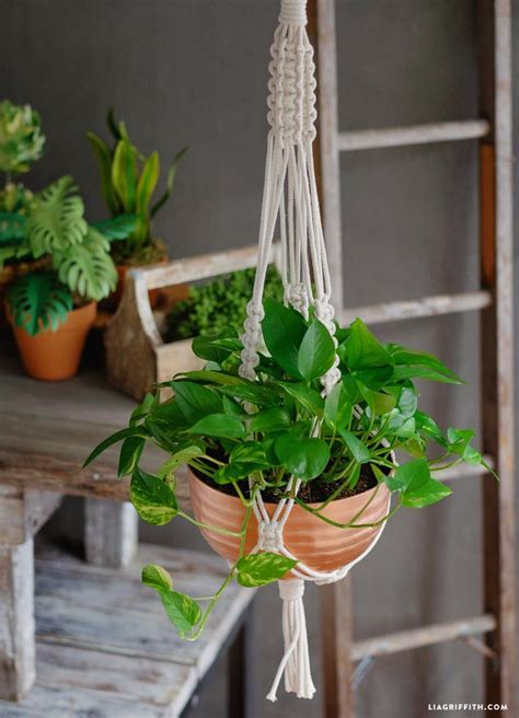 Diy Macrame Plant Holder - 25 best ideas about macrame plant holder on