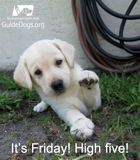friday puppy happy friday puppies www imgkid the image kid has it