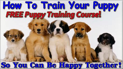 how to make a puppy stop whining how to to get your puppy to stop whining breeds picture