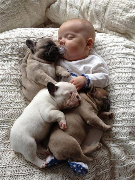 puppies buzzfeed 11 incredibly important photos of a baby covered in bulldog puppies