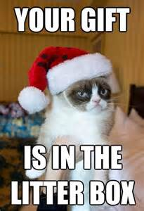 Meme Gift - 52 best images about best of grumpy cat on pinterest
