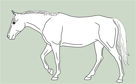horse templates for photoshop template walking horse by mausergirl on deviantart