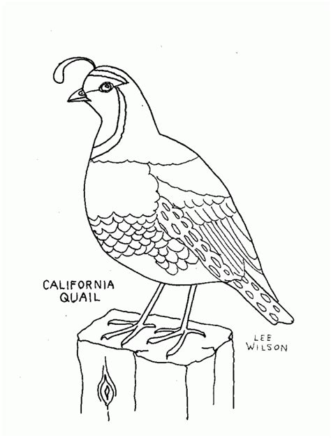 coloring page quail quail coloring pages for preschool preschool and