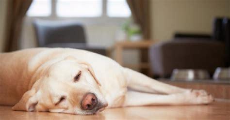 alkaline phosphatase high in dogs causes of elevated alkaline phosphatase in dogs ehow uk
