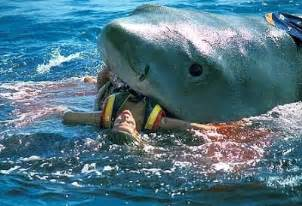 White sharks eating people latest images pictures 2013 beautiful and