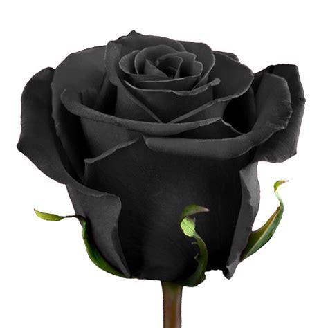 Black Roses Xxl Blooms Farm Direct Magnaflor 174 Black Roses For