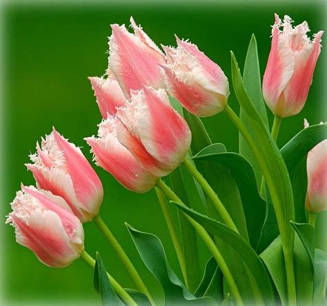 imagenes de flores para descargar descargar gratis imagenes de flores exoticas para