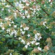fiori ordine alfabetico piante da giardino in ordine alfabetico