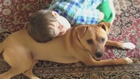 xena the warrior puppy rescue s transformation leads to a miracle for an autistic boy