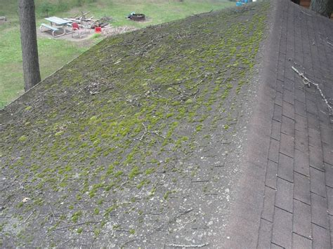 why is there moss on my roof faq ned gutter cleaning of island