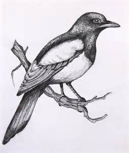 pencil drawing of a magpiehelen wells artist