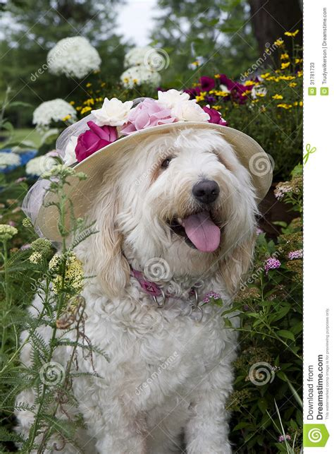 yankee doodle doggie flowers in flower garden stock photos image 31781733