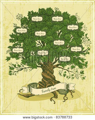 How To Make A Family Tree On Paper For - images stock photos illustrations bigstock