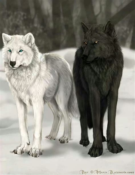 white wolf tattoo 15 best drawing images on animal drawings