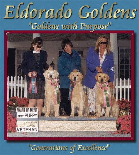 golden retriever breeders in virginia golden retriever breeders virginia dogs in our photo