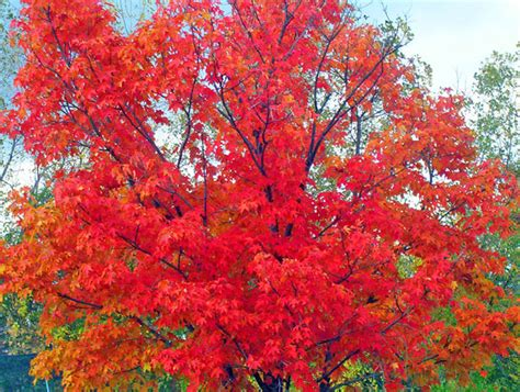 colorful names fall foliage names colorful choices from aspen to zinnia