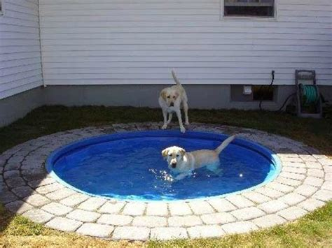 Build A Diy Dog Pool To Keep Your Pup Cool Healthy Paws How To Build A Backyard Pool