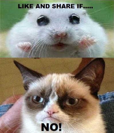 Cute No Meme - share if you like with grumpy cat funny hamster pic