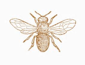 Honey bee graphic vintage x3cb x3ebee x3c b x3e clipart clipart kid
