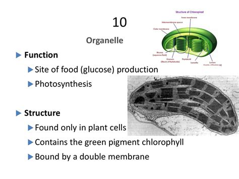 Detox Organelle by Cells And Organelles презентация онлайн