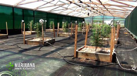 grow marijuana   pro big sluggers