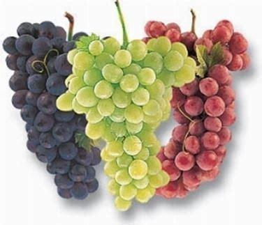 tipi di uva da tavola tipi di uva uva