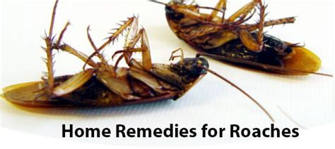 effective home remedies for roaches removal