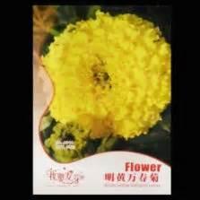 Benih Biji Bunga Dahlia Yellow 1 benih marigold vanilla f1