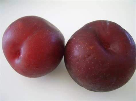 two purple plums free stock photo public domain pictures