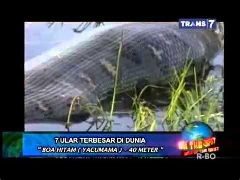 payudara terbesar didunia on the spot 7 ular terbesar di dunia yang pernah ada boa
