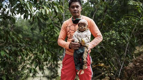 möbel aus indonesien indonesien volk der toraja exhumiert tote verwandte und