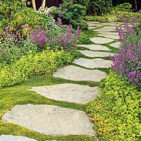 backyard ground cover ideas 25 best ideas about sedum ground cover on pinterest