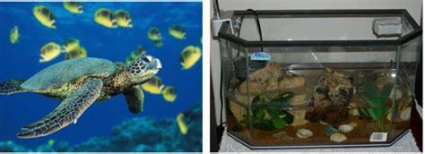 lade per tartarughe d acqua acquario per tartarughe
