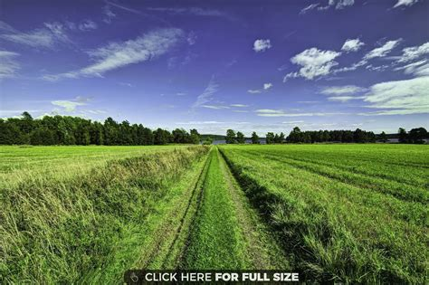 Beautiful Backyard Greeny Wallpapers Photos And Desktop Backgrounds For
